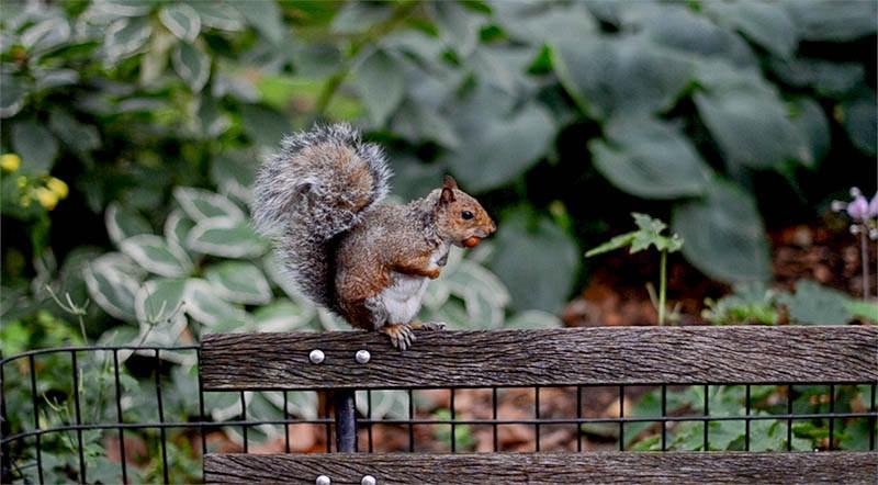 Blog-mode-And-The-City-Lifestyle-5-petites-choses-103-écureuil-central-park