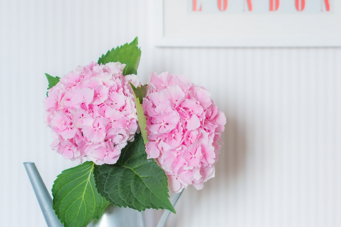 Blog-mode-and-the-city-lifestyle-les-cinq-petites-choses-140-hortensias-2