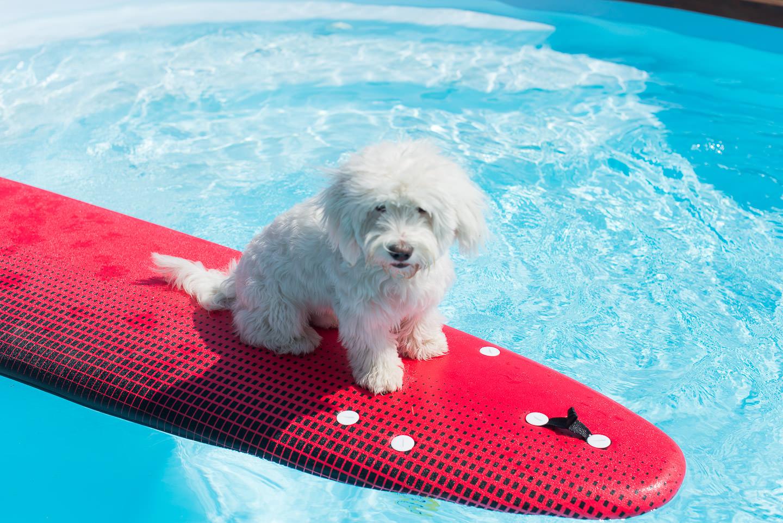 Blog Mode And The City Lifestyle Les Cinq Petites Choses PIxel chien surf