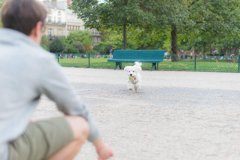 Blog-mode-And-The-City-avoir-chien-appartement-paris-9