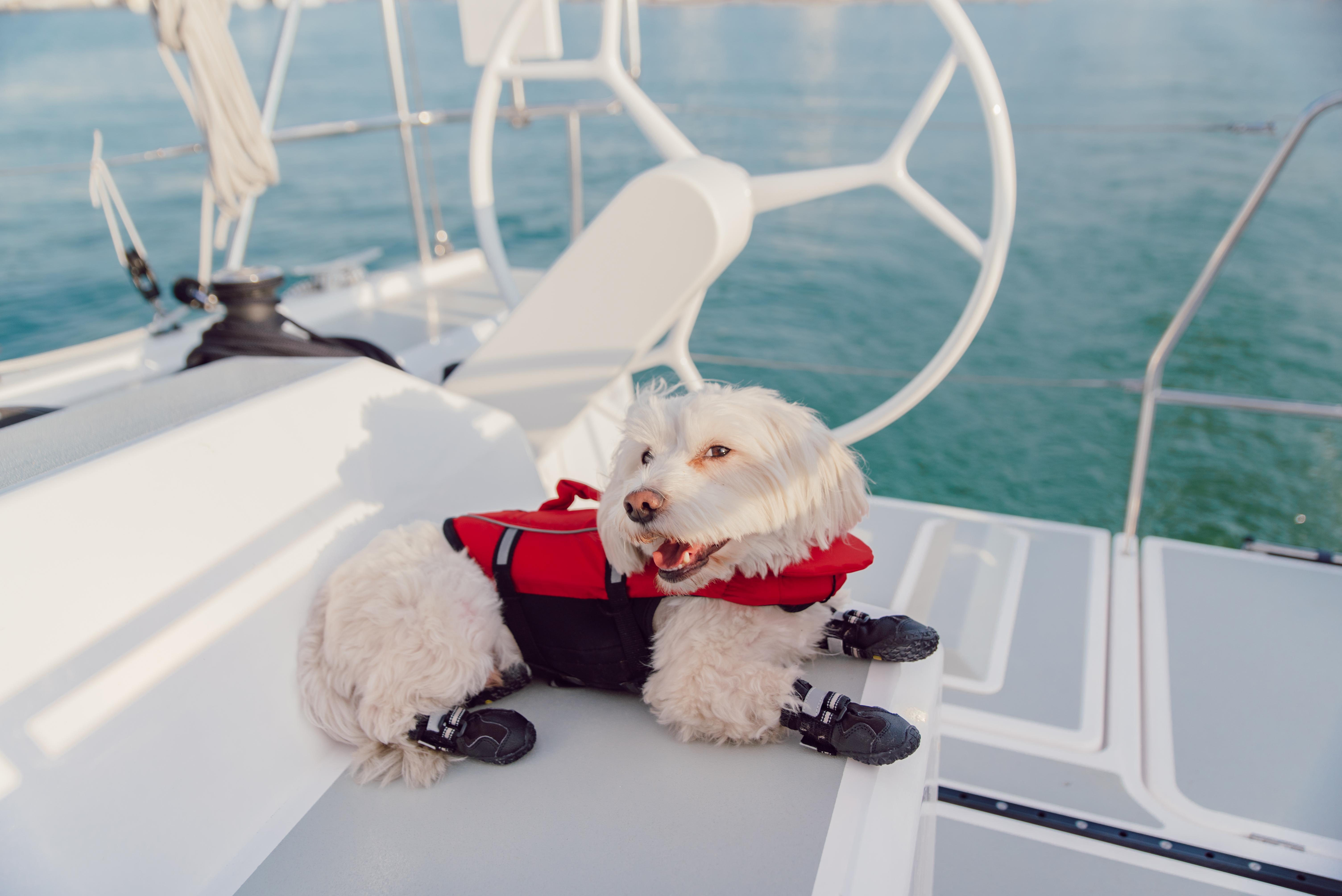 Maif-navigation-Accompagnee-La-Rochelle-bateau-3