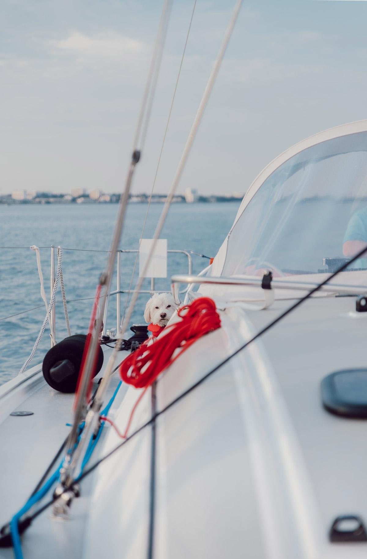 Maif-navigation-Accompagnee-La-Rochelle-bateau-8